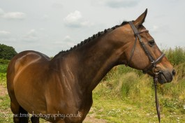 equinephotography-2