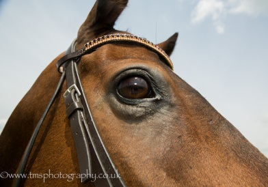 equinephotography