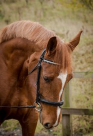 EquinePhotography-0085EquinePhotoshoot_tmsphotography