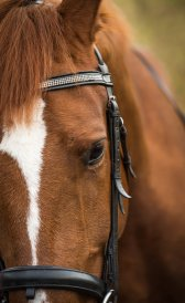 EquinePhotography-0089EquinePhotoshoot_tmsphotography