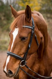EquinePhotography-0179EquinePhotoshoot_tmsphotography
