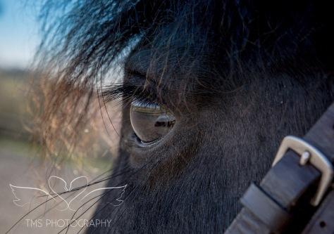 EquinePhotoshoot_Derbyshire-7