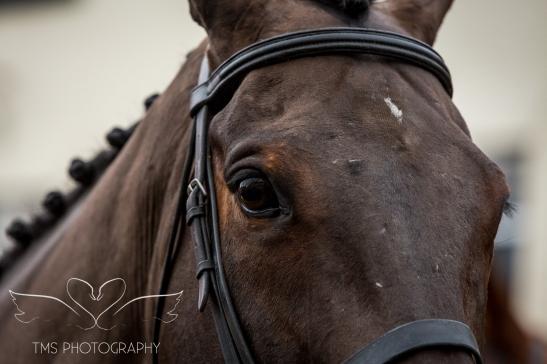 equineeventsphotographer_warwickshire-40