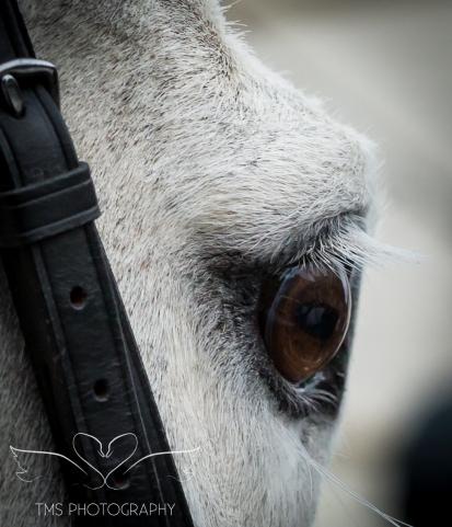 equineeventsphotographer_warwickshire-53