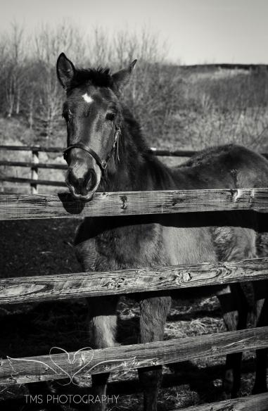 equinephotographer_Derbyshire-13