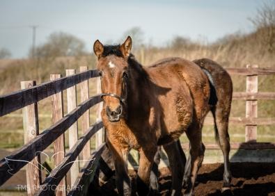 equinephotographer_Derbyshire-26