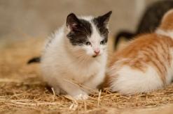 Kittens_photos (10 of 21)