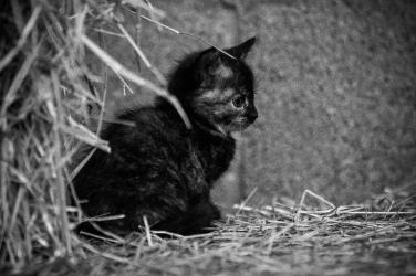 Kittens_photos (12 of 21)
