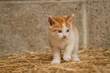 Kittens_photos (13 of 21)
