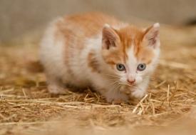 Kittens_photos (15 of 21)