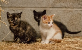 Kittens_photos (16 of 21)