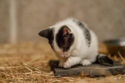 Kittens_photos (17 of 21)