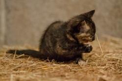Kittens_photos (18 of 21)