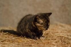 Kittens_photos (19 of 21)