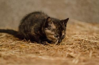 Kittens_photos (20 of 21)