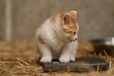 Kittens_photos (21 of 21)