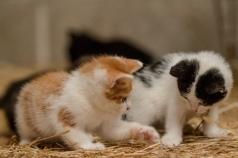 Kittens_photos (4 of 21)