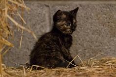 Kittens_photos (5 of 21)