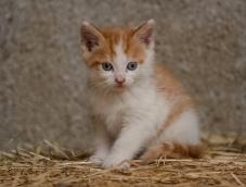 Kittens_photos (7 of 21)