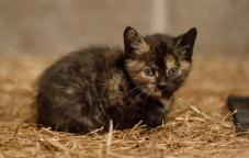 Kittens_photos (8 of 21)