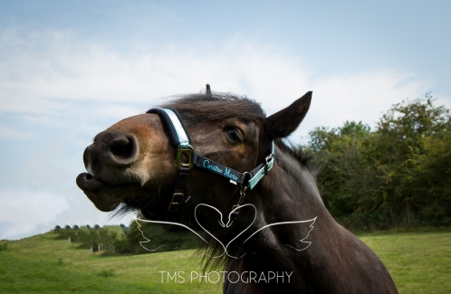 equinephotographer_Leicestershire-18