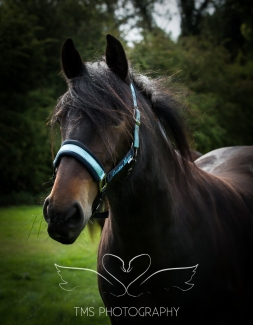 equinephotographer_Leicestershire-19