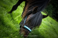 equinephotographer_Leicestershire-23