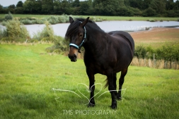 equinephotographer_Leicestershire-32