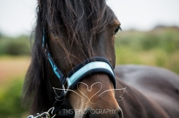 equinephotographer_Leicestershire-42