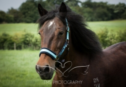 equinephotographer_Leicestershire-47