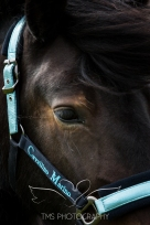 equinephotographer_Leicestershire-55