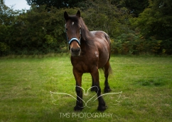 equinephotographer_Leicestershire-6