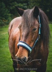 equinephotographer_Leicestershire