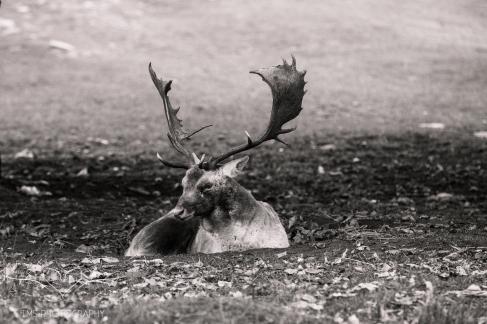 bradgatepark_photography-22-of-34