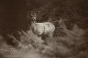 bradgatepark_photography-34-of-34