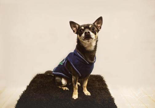 dog_photographer_derbyshire-106