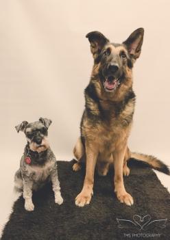 dog_photographer_derbyshire-37