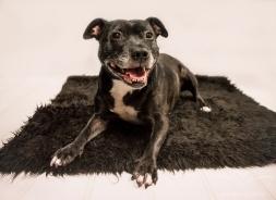 dog_photographer_derbyshire-92