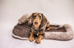 dog_photographer_leicestershire