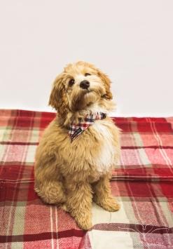 dog_portraits_photographer_leicestershire-17