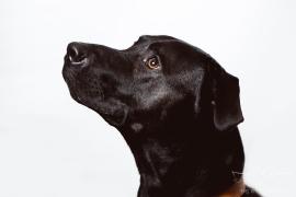 dog_portraits_photographer_leicestershire-24