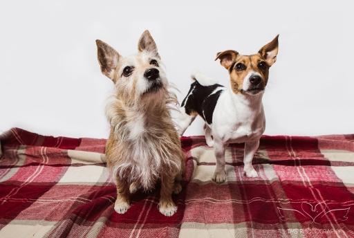 dog_portraits_photographer_leicestershire-43