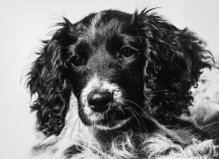 dog_portraits_photographer_leicestershire-55