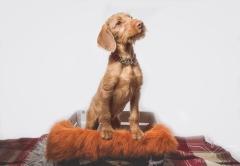 dog_portraits_photographer_leicestershire-62