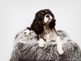 dog_portraits_photographer_leicestershire-73