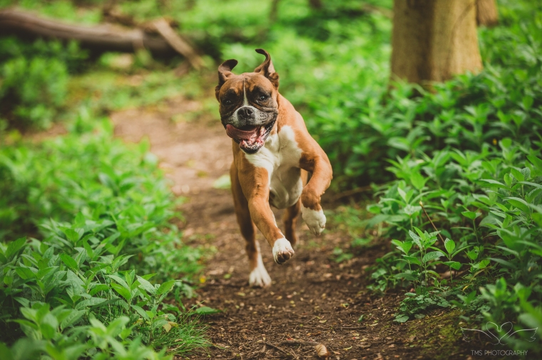 dog_photographer_Derbyshire-9