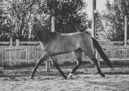 Horse_photographer_Derbyshire-13