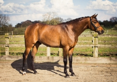 Horse_photographer_Derbyshire-18