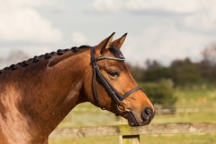 Horse_photographer_Derbyshire-19