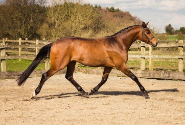 Horse_photographer_Derbyshire-21